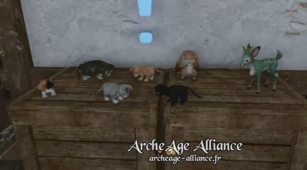 Minis animaux de compagnie