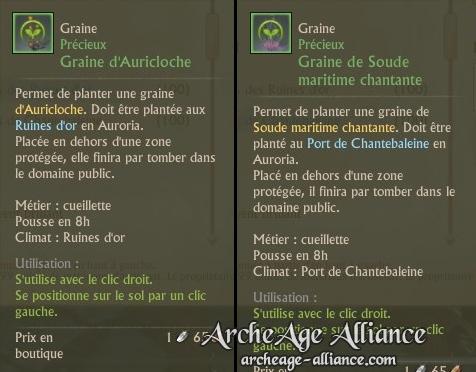 Graine Auricloche et Sonde maritime de Chantebaleine
