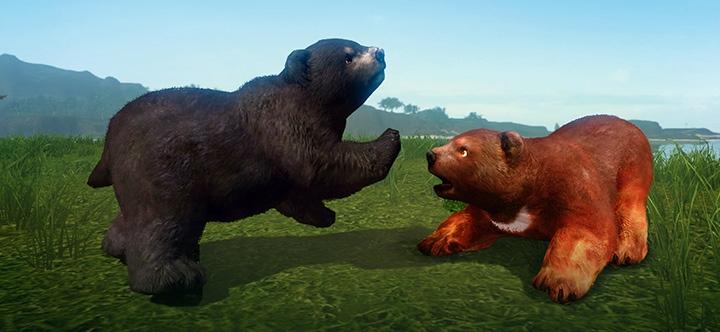 Les familiers ours volcanique et ours d'ébène sur la boutique ArcheAge