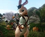 Mise à jour de la Boutique - Bondissez avec les montures lapins